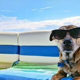 Cani, gatti e canarini: metà dei padroni rinuncia alle vacanze per non lasciarli soli