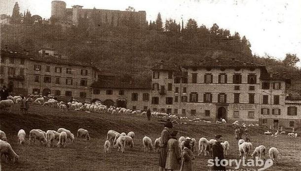 Gli anni Cinquanta alla Fara Pecore al pascolo in città