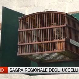 Torna la sagra regionale degli uccelli  In diecimila ad Almenno San Salvatore