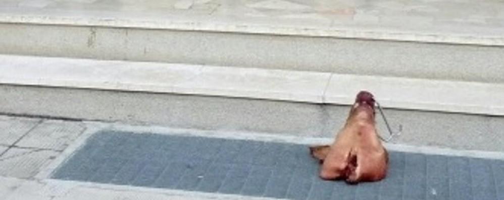 Capriate, testa di maiale alla sede del Pd  «Un gesto vile, non ci spaventa»