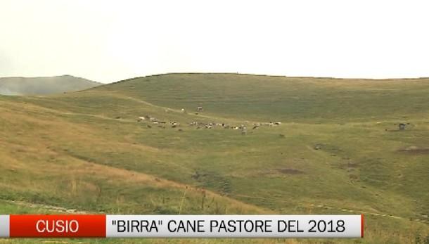 Cusio, «Birra» il cane pastore 2018  Paolo Rota bissa l'alloro del 2016