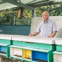 L'appello: «Una vita tra le api cerco qualcuno a cui passare l'azienda»