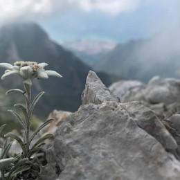 «Tra le rocce... una stella»