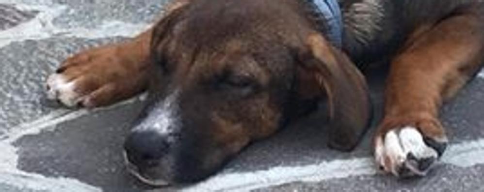 Lasciato in strada rischia l'investimento Palosco, l'appello: adottate questo cane