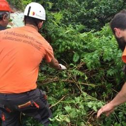 Venticinquemila ore di volontariato per pulire le Mura di Bergamo