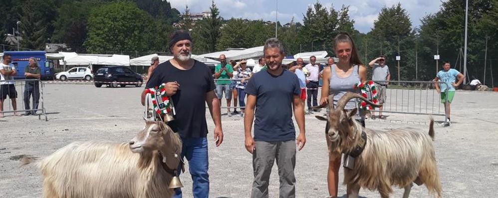 Roncola inaugura le fiere zootecniche Ecco il «re» e la «regina» delle capre