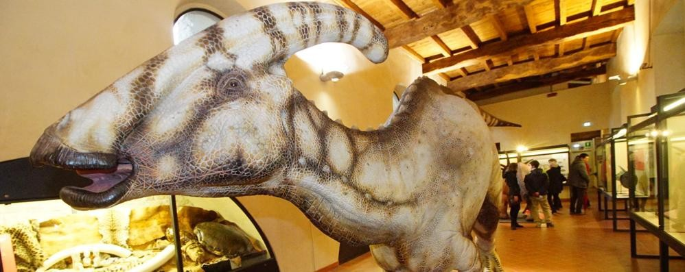 «Dinosauri, in 5 mesi i numeri di un anno» Al «Caffi» è record nonostante il ticket