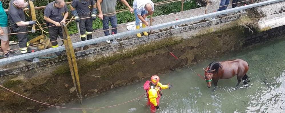 Cavallo scivola in un canale ad Ardesio Recuperato con l'autogru dei pompieri