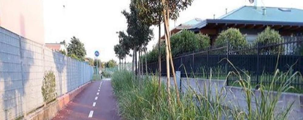 Erba alta in via Magrini - Foto Segnalazioni anche  a Colognola