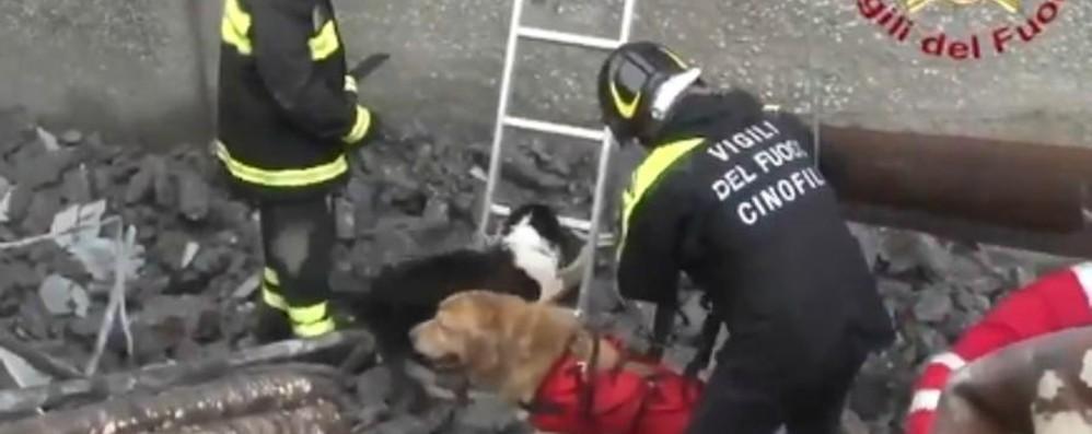Il crollo del viadotto e quei post sui cani Gesta eroiche, le polemiche non servono