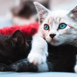 Parla la presunta killer di gatti «Tramutata in mostro, ma non li ho uccisi»