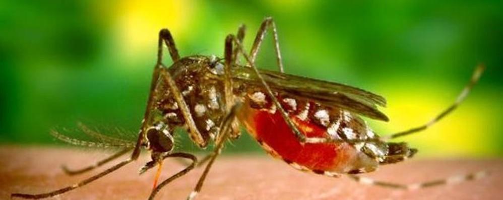 Febbre del Nilo, aumentano i casi Potenziata la lotta alle zanzare