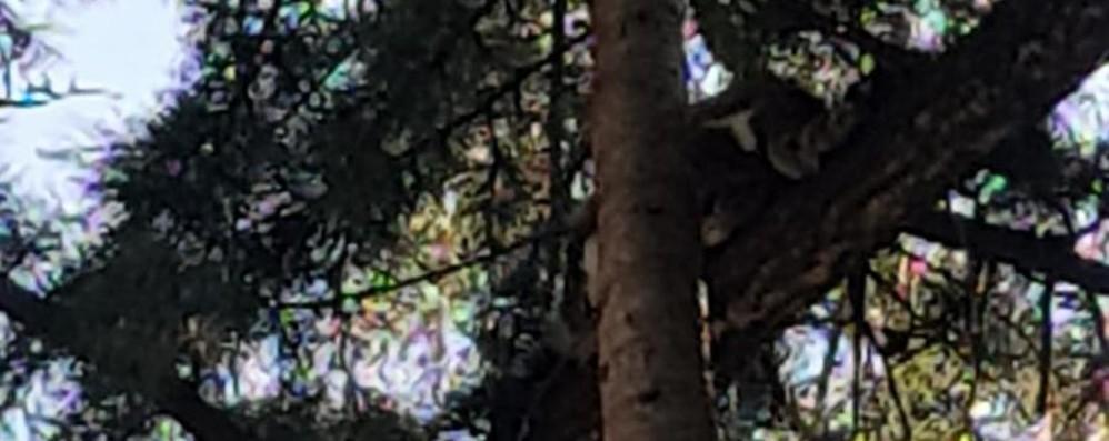 Vall'Alta, gatto bloccato su un albero I vigili del fuoco devono tagliare il ramo