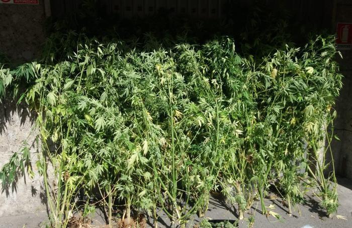 Le piante trovate a Zogno