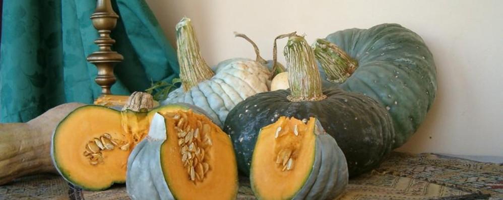 Ladri di zucche a Stezzano «Ripulito» l'orto degli studenti