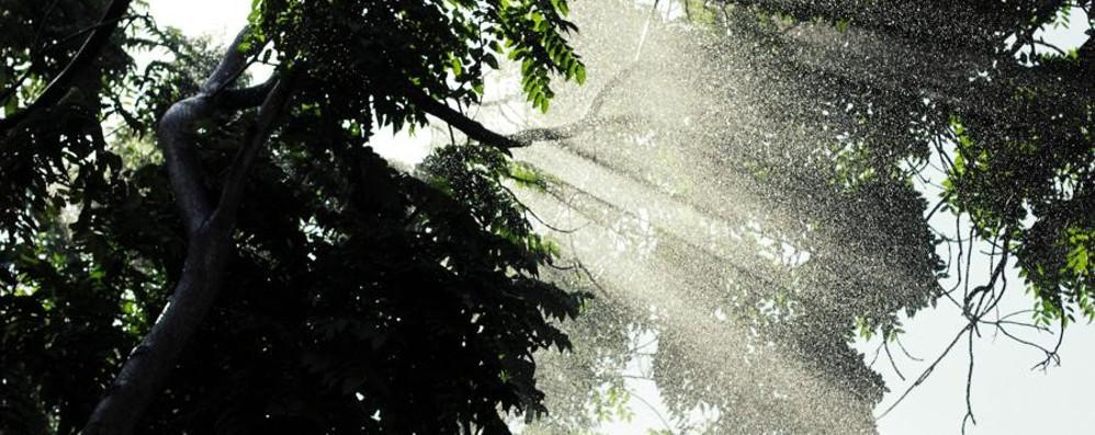 Temporali «spezza-afa» al Nord Acquazzoni in arrivo nel fine settimana