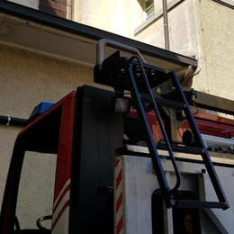 Sciame di calabroni a scuola Intervento dei Vigili del fuoco
