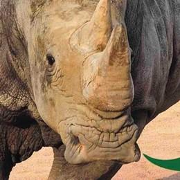 A tu per tu con... i rinoceronti Sabato giornata educativa alla Cornelle