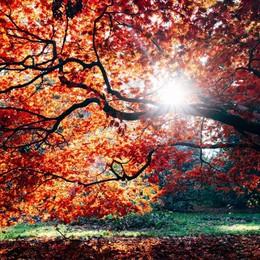 Meteo, stop al caldo anomalo Segnali d'autunno la prossima settimana