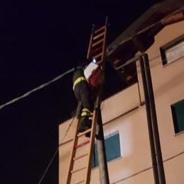 Gazzaniga, gattino sul palo del telefono Vigili del fuoco in azione nella notte