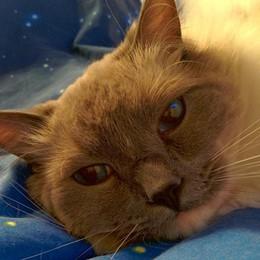«Troppi gatti nell'abitazione» Minaccia il veterinario con un coltello