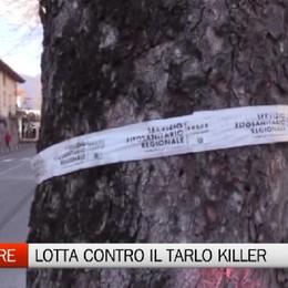 Trescore - Continua la lotta contro il killer delle piante