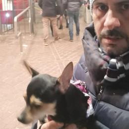 Niente cani senza museruola  Chihuahua respinto sulla funicolare