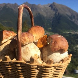 Tassa per la raccolta di funghi e tartufi I cercatori: «Un'altra gabella»