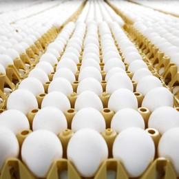 «Timbrare le uova all'origine» Nuova tutela per il made in Italy