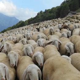 Troppa nebbia, pastore perde il gregge Ai vigili chiede: avete visto delle pecore?