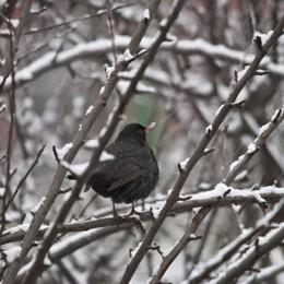 Il maltempo in arrivo con pioggia e neve A Bergamo sono i giorni della merla