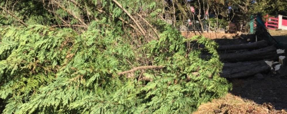 «Mi hanno tagliato 4 pini nel giardino» L'appello del proprietario: aiutatemi