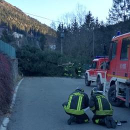 Albero cade sulla linea telefonica Problemi a Castione della Presolana