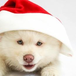 Se Babbo Natale ha portato in dono un cucciolo, ecco alcuni consigli