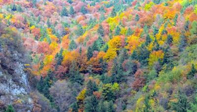 «Il bosco è una tavolozza di colori...»