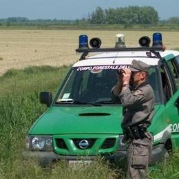 Attività antibracconaggio in Valle Imagna  Sequestrati volatili e strumenti di caccia
