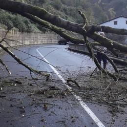 Cade una pianta a Gandino - Foto Traffico deviato, disagi alle linee elettriche