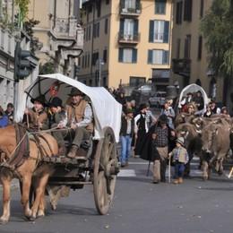 Torna il Festival del Pastoralismo C'è la pecora «Gigante di Bergamo»