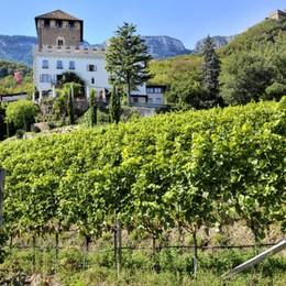 Alto Adige, in alto i calici nei «Vinum Hotels»