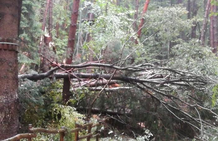 Gli alberi caduti nel Parco Avventura di Clusone