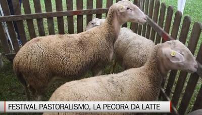 Festival del Pastoralismo, convegno sulla pecora da latte
