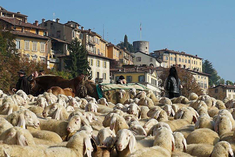 Valorizzare la lana attraverso una filiera locale