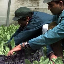 «Dagli immigrati il 10% del Pil provinciale Salari inferiori del 31% rispetto alla media»