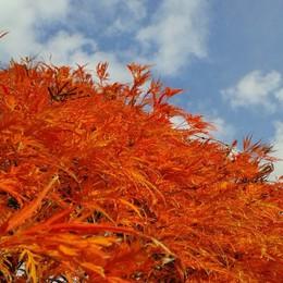 «Foglie arancio come piume al vento...»