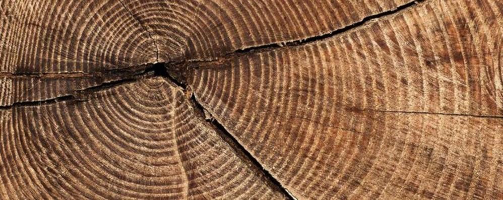 «Boschetti e orti scolastici» Alla scoperta degli alberi