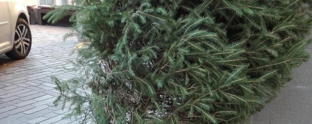 Alberi di Natale nel mirino dei vandali «Sappiamo che sono stati tre ragazzi»