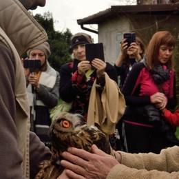 Vola libero il gufetto reale nato nell'Oasi di Valpredina - Video