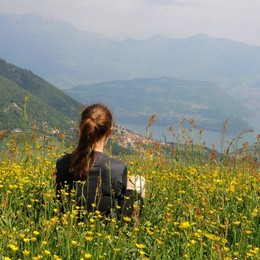 Fiori bellissimi che si possono trovare in montagna d'estate