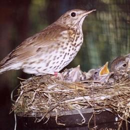 Avevano reti e uccelli di specie protetta Bracconieri bergamaschi denunciati