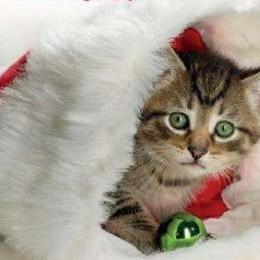 C'è il «Christmas party» Una domenica al Gattile